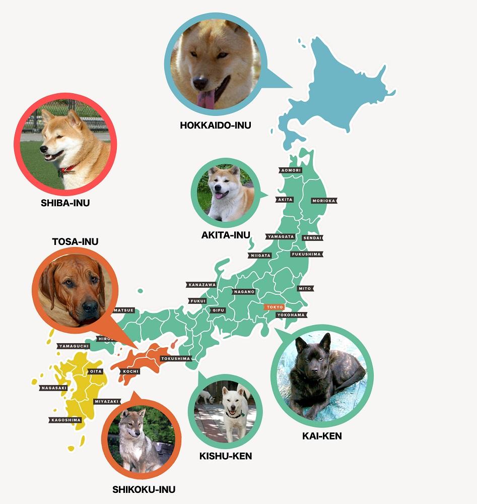 raças de cães japoneses