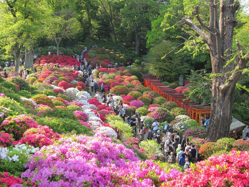 flores do templo nezu jinja
