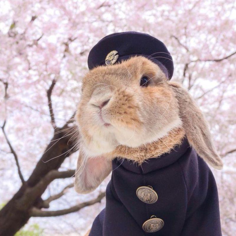 coelho Pui Pui