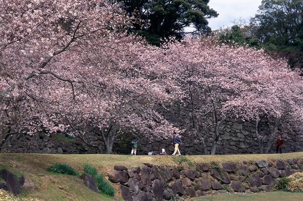 Nagoya Castle Ruins