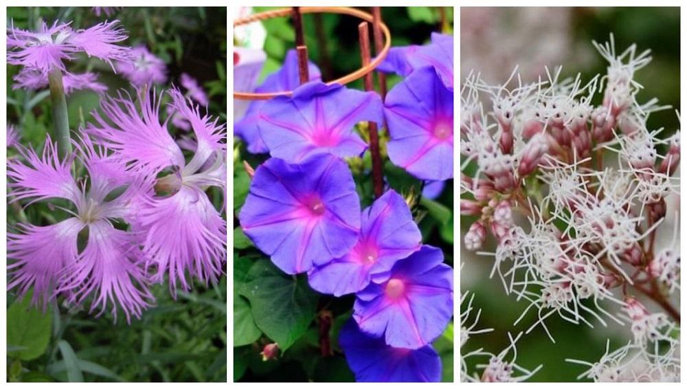 flores de outono 2