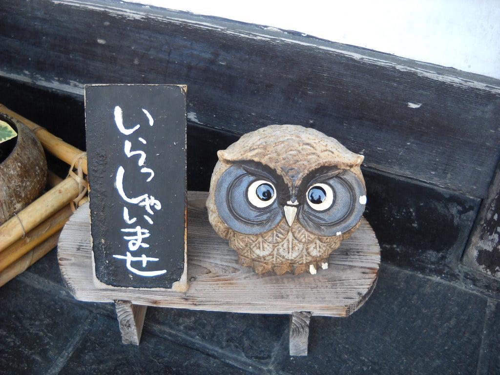 coruja no Japão