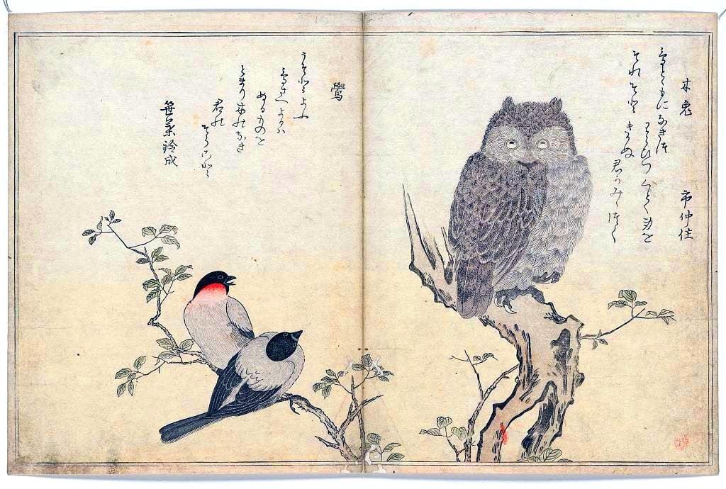 coruja tradicional Japão