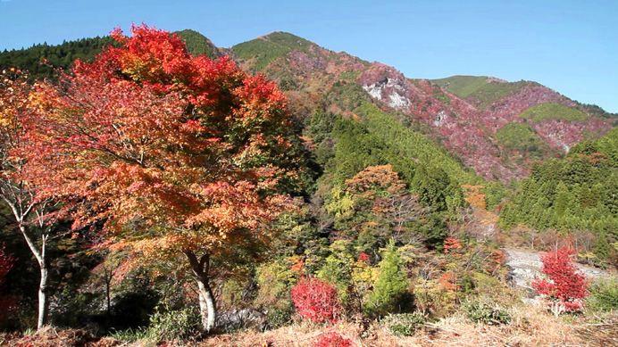 shikoku cores outono
