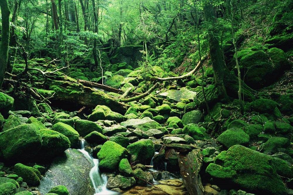 Princesa Mononoke-floresta