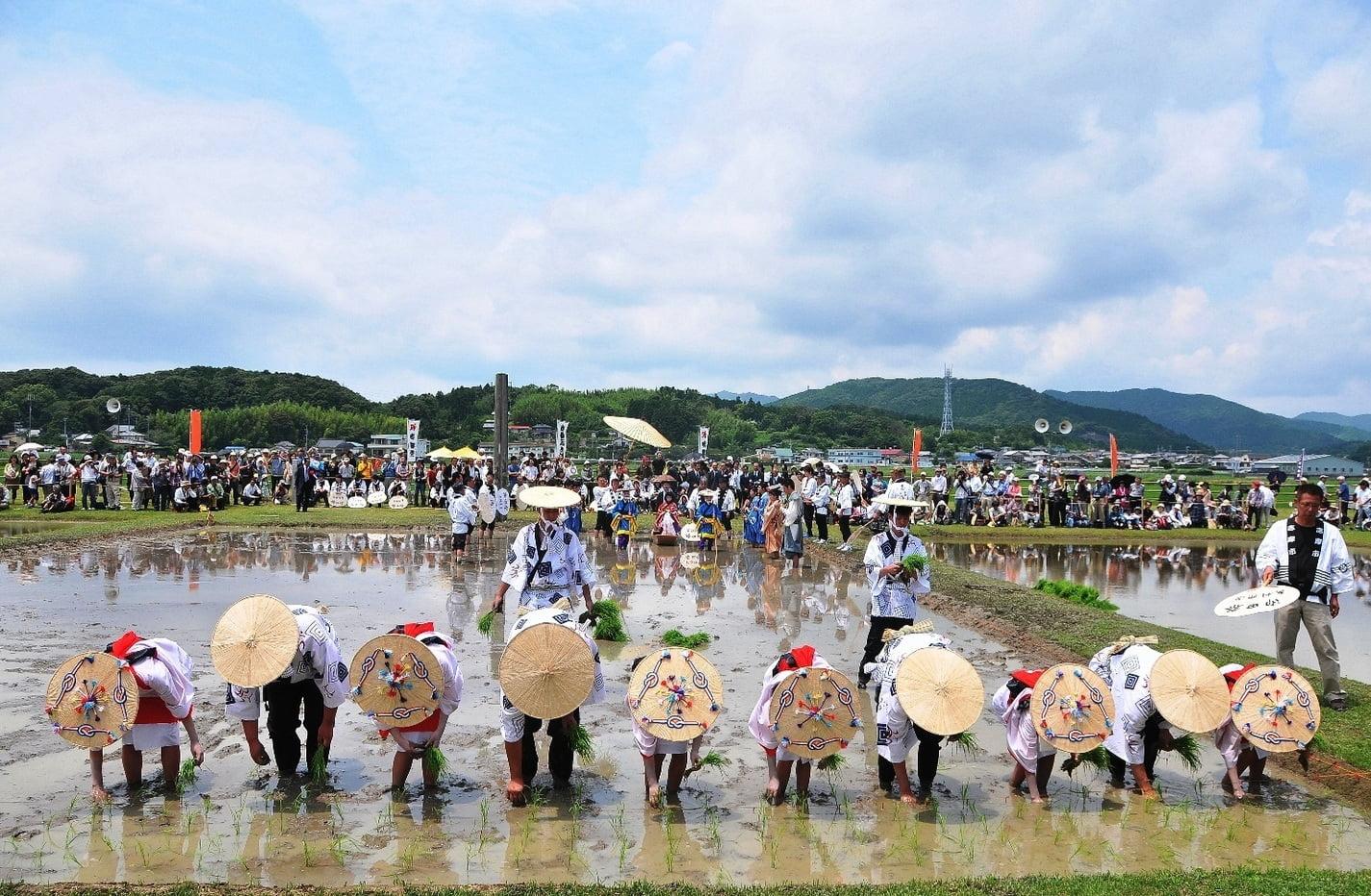 Festival Omita