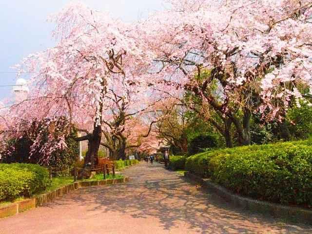 Tsutsujigaoka