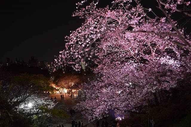Parque Nishi Sakura