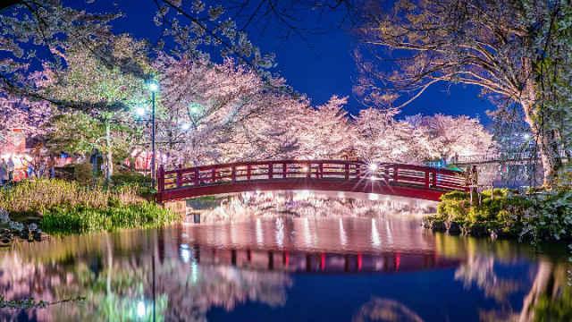 parque garyu sakura