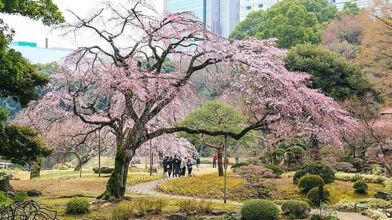àrvore centenária do parque