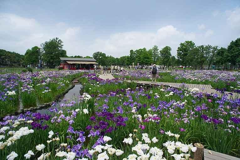Flores do parque Mizumoto