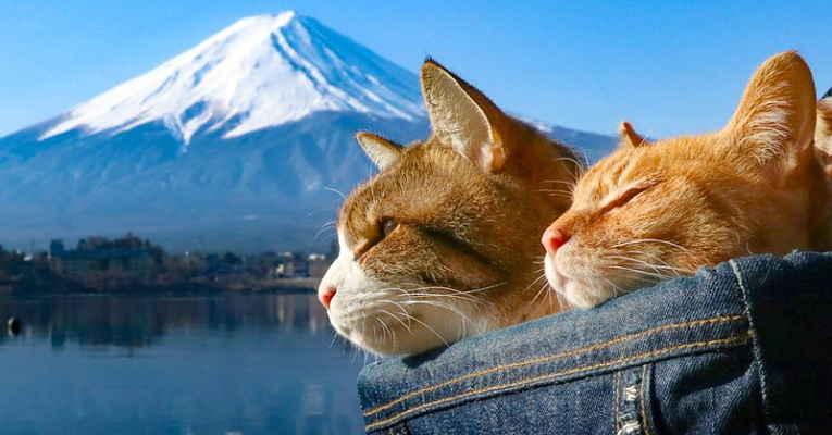 Gatos viajantes no Monte Fuji