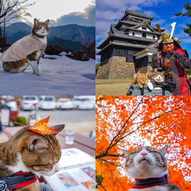 Gatos viajantes pelo Japão