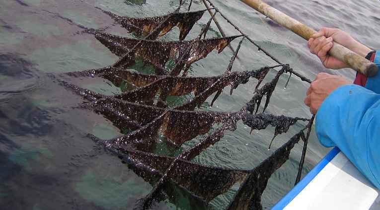 Pesca artesanal de nori
