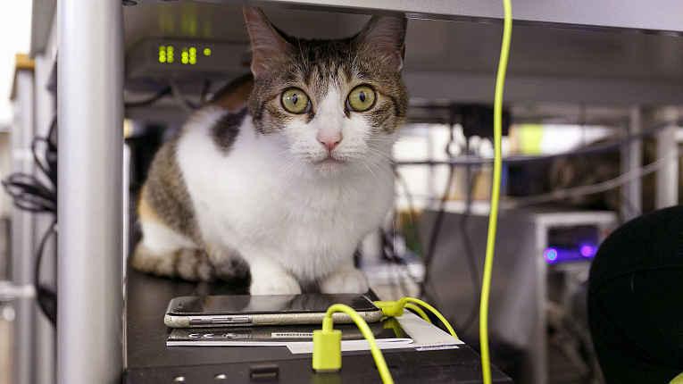Gato resgatado em cima de desktop