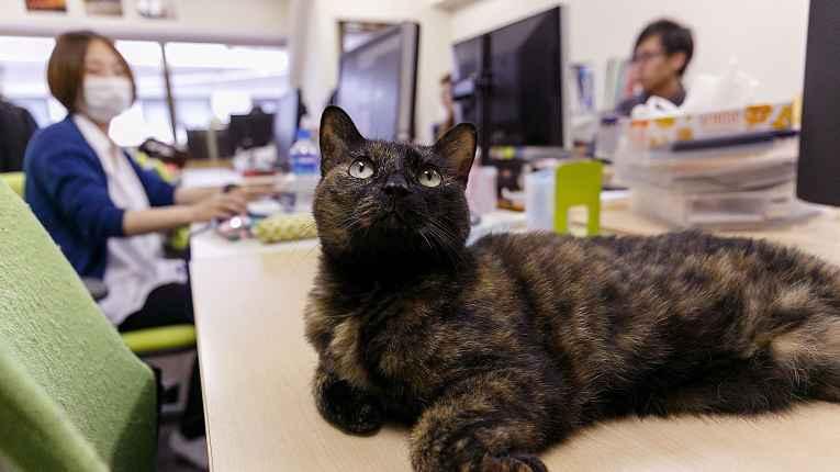 gato na mesa de trabalho