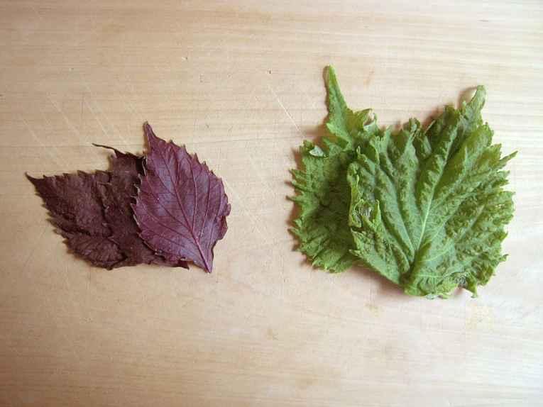 Folhas de shiso