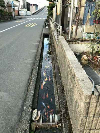Canal na rua com água limpa e peixe koi