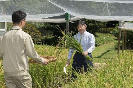 Naruhito com arroz da colheita
