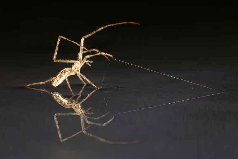 Aranha produzindo fio de teia
