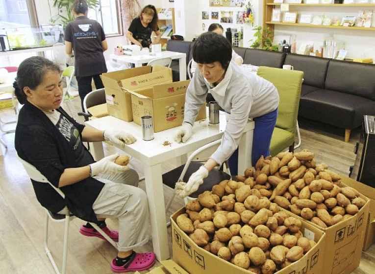 Pessoas selecionando batata doce
